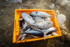 长的海氏,越南- 2016年7月03日:在plasitc篮子的鲜鱼在长的海氏捕鱼港口 免版税图库摄影