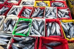 长的海氏,越南- 2016年7月03日:在plasitc篮子的鲜鱼待售在长的海氏鱼市上在海滩 库存图片