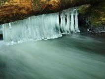长的稀薄的冰柱在下落的树干垂悬。 图库摄影