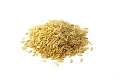长的米 免版税库存图片
