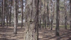 长的红色礼服的美女走在女性柔软和和谐生活的森林概念的 ?? 影视素材