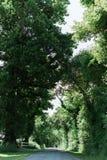 长的街道标示用大绿色树 免版税库存图片