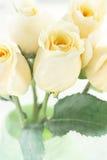 长的词根黄色玫瑰 库存图片