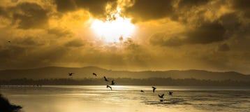 长的跳船海滩储备中央海岸, NSW 免版税库存图片