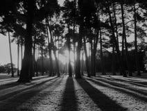 长的阴影在哈格利公园 免版税库存照片