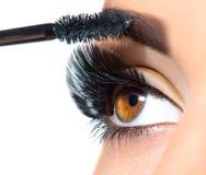 长的鞭子特写镜头 应用在她的眼睛的美丽的妇女染睫毛油 免版税图库摄影