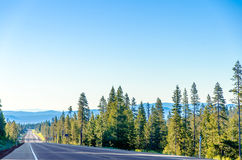 长的高速公路和森林 库存图片