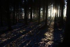 长的阴影在日出的森林里 免版税库存照片