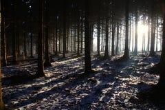 长的阴影在日出的森林 免版税库存图片
