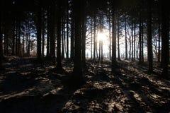 长的阴影在森林 免版税图库摄影