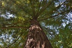 长的结构树 免版税库存图片