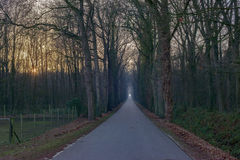 长的直路在冬天森林Achterhoek里 海尔德兰省 的treadled 图库摄影