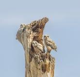 长羽毛的三 免版税图库摄影