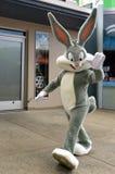长耳兔 库存照片