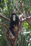 长臂猿坐树 免版税库存图片
