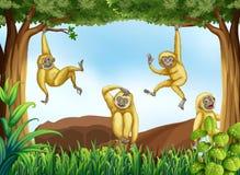 长臂猿 皇族释放例证