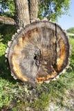 长被削的树 免版税库存照片