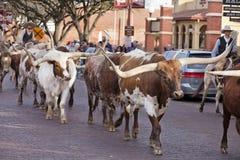 长角牛在沃思堡牲畜饲养场的牛驱动 库存照片