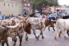 长角牛在沃思堡牲畜饲养场的牛驱动 免版税库存照片