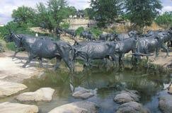 长角牛牛雕塑在先驱广场,达拉斯TX 库存图片
