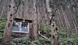 长野森林独特的看法在日本 图库摄影