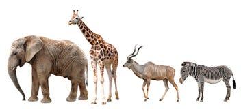 长颈鹿、Kudu、斑马和大象 免版税库存照片
