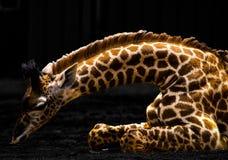 长颈鹿与充满活力的颜色的艺术设计 皇族释放例证