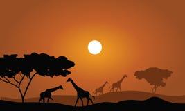 长颈鹿剪影大草原风景 库存照片