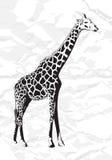 长颈鹿向量 库存照片