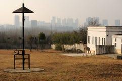 长颈鹿和城市 免版税库存图片