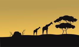 长颈鹿和树剪影  免版税库存图片