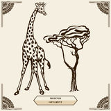 长颈鹿和mehendi装饰品 库存照片