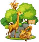 长颈鹿在动物园里 向量例证
