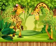 长颈鹿在密林 向量例证