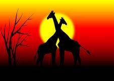 长颈鹿在有日落的非洲 免版税库存照片
