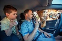 长颈鹿在汽车和等待的食物投入了头从游人 免版税库存照片