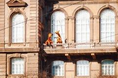 长颈鹿在赫尔辛基动物学学院的阳台的drinki茶 免版税库存图片