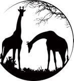 长颈鹿场面 库存例证