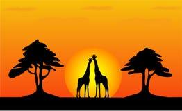 长颈鹿徒步旅行队日落 免版税库存图片