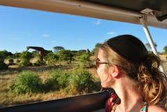 长颈鹿徒步旅行队 图库摄影