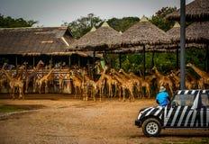 长颈鹿徒步旅行队 免版税库存照片