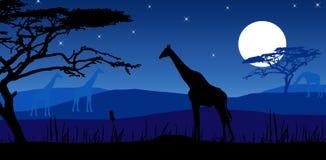 长颈鹿月光 库存图片