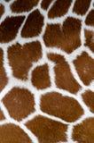 长颈鹿模式 库存图片