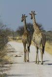 长颈鹿步行沿着向下路的对在Etosha 免版税库存图片