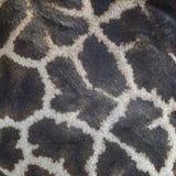 长颈鹿皮肤 免版税库存图片