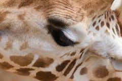 长颈鹿眼睛 免版税库存照片