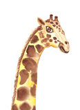 长颈鹿水彩 免版税库存图片