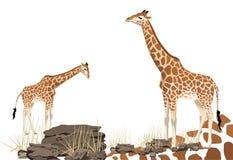 长颈鹿 库存图片