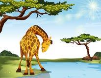 长颈鹿 皇族释放例证