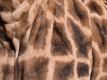 长颈鹿` s皮肤特写镜头  免版税库存照片